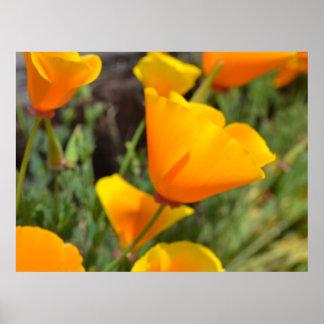 Flores anaranjadas de la primavera impresiones