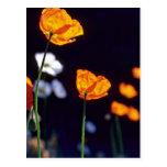 Flores anaranjadas de las amapolas de Islandia Postal
