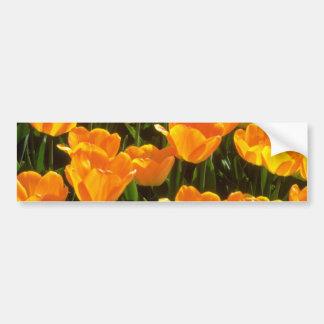 Flores anaranjadas de los tulipanes pegatina de parachoque