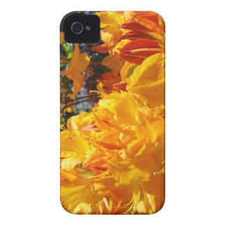 Flores anaranjadas de Rhodies de la caja intrépida iPhone 4 Case-Mate Cobertura