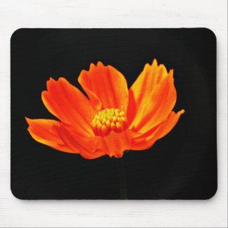 Flores anaranjadas del cosmos mousepad