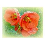 Flores anaranjadas del hibisco postal