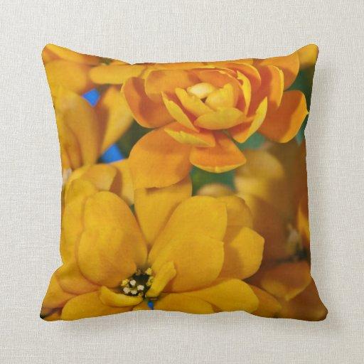 Flores anaranjadas del kalanchoe almohada