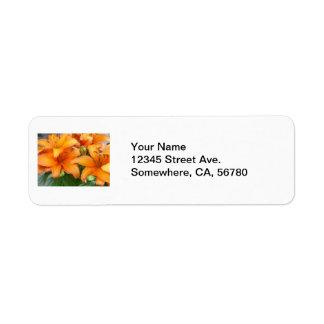 Flores anaranjadas del lirio etiquetas de remite