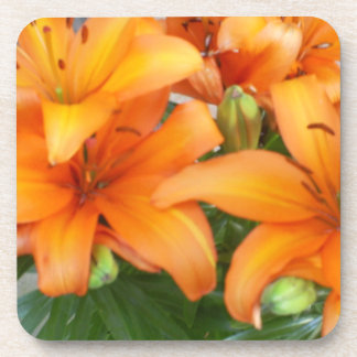 Flores anaranjadas del lirio posavaso