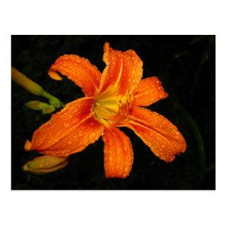 Flores anaranjadas del lirio tigrado postal