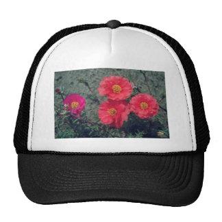 Flores anaranjadas del musgo color de rosa (Portul Gorro De Camionero