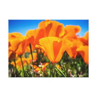 Flores anaranjadas hermosas de la amapola en un impresión en lienzo