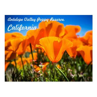 Flores anaranjadas hermosas de la amapola en un postal