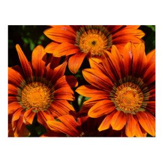 Flores anaranjadas hermosas tarjeta postal