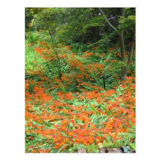 Flores anaranjadas tarjetas postales