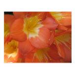 Flores anaranjadas y amarillas en los jardines de  postales