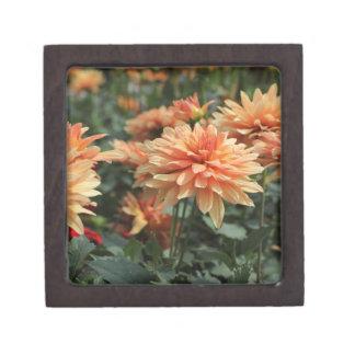 Flores anaranjados de la dalia caja de recuerdo de calidad