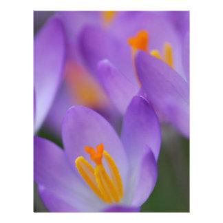 Flores apacibles finos del azafrán membrete