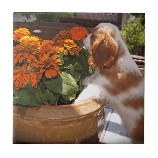 Flores arrogantes del perro de aguas de rey Charle Azulejo Cuadrado Pequeño