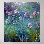 Flores artísticas de la bella arte del Agapanthus Poster