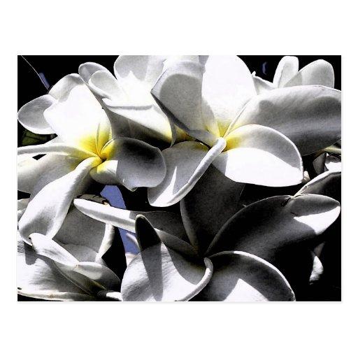 Flores artísticas del Plumeria Tarjetas Postales