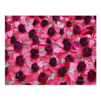 Flores asiáticas raras que flotan en agua tarjeta postal
