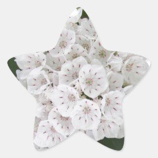 Flores asteroides blancas del laurel de montaña pegatina en forma de estrella