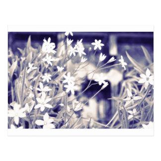 Flores asteroides chispa, postal