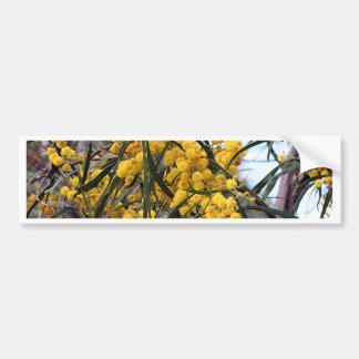 Flores australianos amarillos del árbol del zarzo pegatina para auto