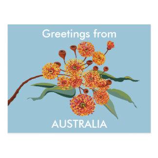 Flores australianos de la goma tarjeta postal