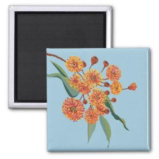 Flores australianos del árbol de goma imán cuadrado