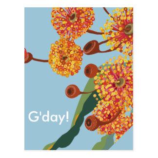 Flores australianos del árbol de goma tarjetas postales