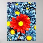 Flores azules coloridas de las margaritas de Gerbe Posters