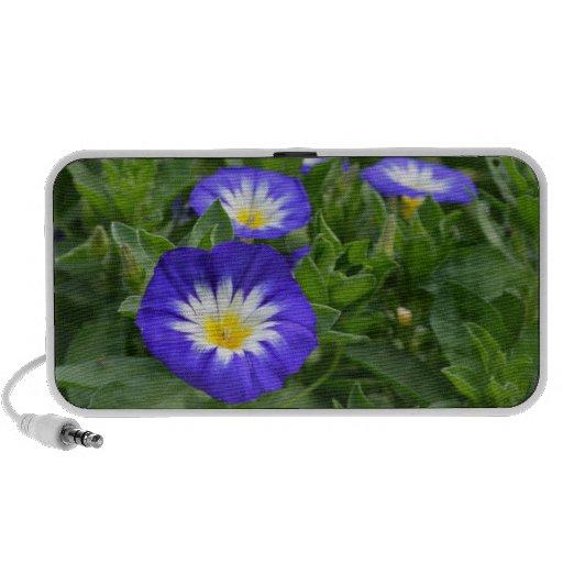 Flores azules de la correhuela de la bandera iPod altavoz