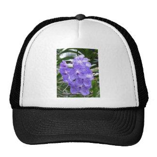 Flores azules de la orquídea de Vanda Gorros