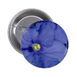 Flores azules de la violeta africana pins