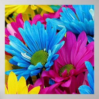 Flores azules de las margaritas de Gerber del Póster