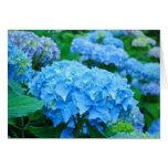 Flores azules de los Hydrangeas de las tarjetas de