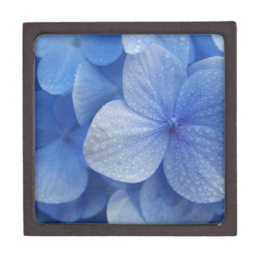 Flores azules de Madagascar Cajas De Regalo De Calidad