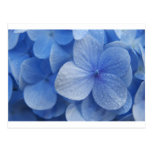 Flores azules de Madagascar Postal