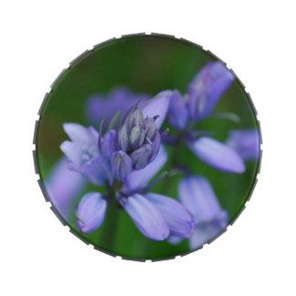Flores azules del Campanula Jarrones De Caramelos