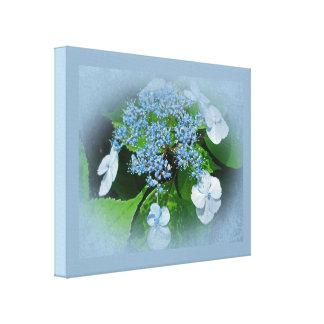 Flores azules del Hydrangea del casquillo del cord Impresión En Lienzo