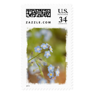 Flores azules dulces franqueo