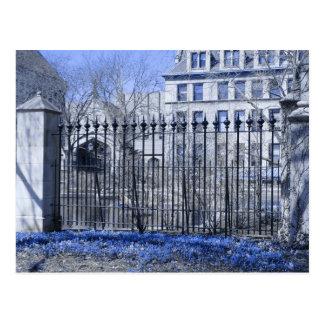 Flores azules en la charca de la botánica postales