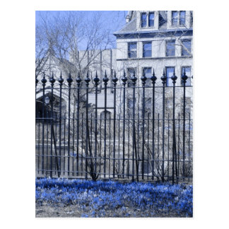 Flores azules en la charca de la botánica postal