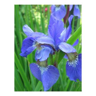 """flores azules hermosas del iris folleto 8.5"""" x 11"""""""
