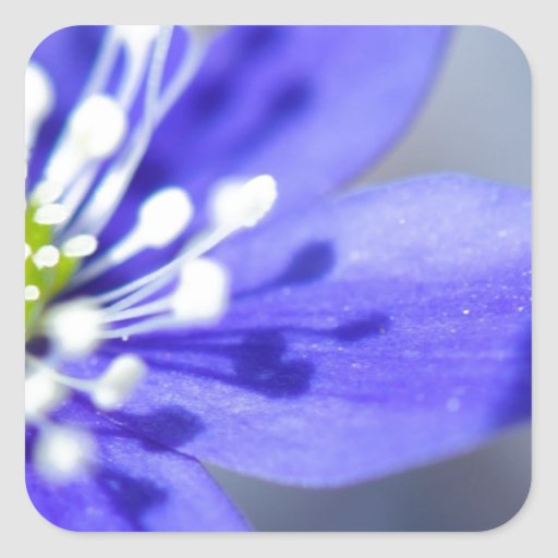 Flores azules hermosas pegatinas cuadradases