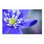 Flores azules hermosas tarjeta postal