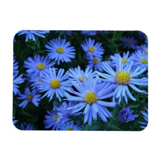 Flores azules iman rectangular