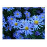 Flores azules tarjetas postales