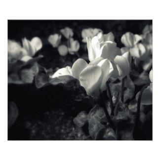 Flores bajo claro de luna fotografías