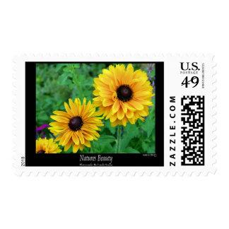 Flores Belleza-Amarillos de las naturalezas Sellos Postales