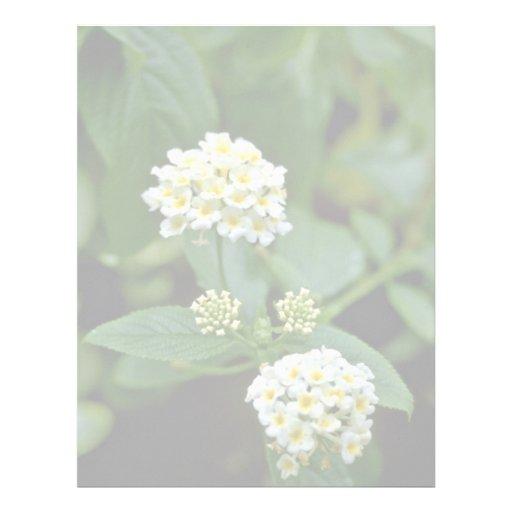 Flores blancas agrupadas con la flor amarilla de l plantillas de membrete