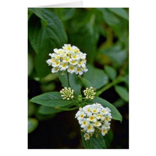 Flores blancas agrupadas con la flor amarilla de l tarjeta de felicitación